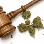 What the Average Person Needs to Know About Cannabis Law